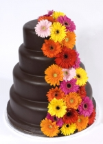 chocolate ganache wedding cake with gerberas